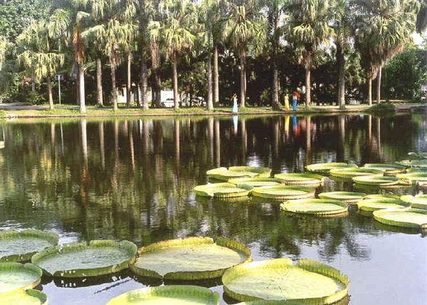 是西双版纳风景名胜区景洪城区的主要