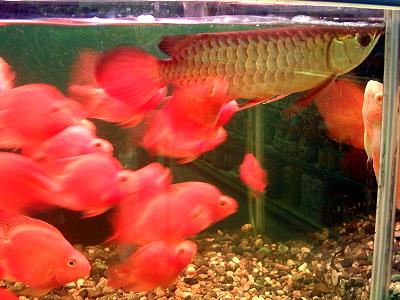 渔家水族量贩,台湾苗栗购物
