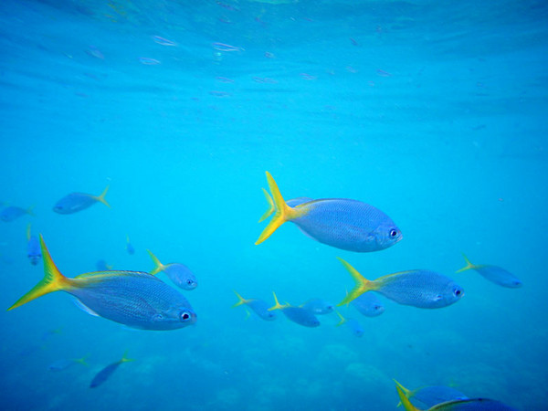美娜多海洋生物数量丰富的让人乍舌