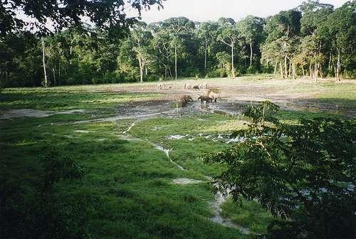 德赞噶-桑哈特别森林保护区