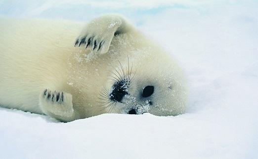 福克兰群岛:海狮岛