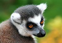 【马达加斯加】马达加斯加猴面包树与狐猴8天探秘之旅