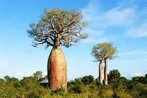 【马达加斯加】马达加斯加7号国道风景人文穿越之旅12天
