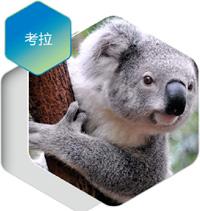 【长沙直飞】澳大利亚、新西兰、凯恩斯、墨尔本、海豚岛海陆空12日