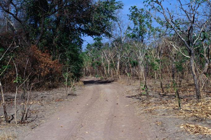 扎库玛国家公园