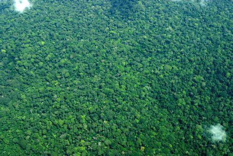 萨隆加国家公园