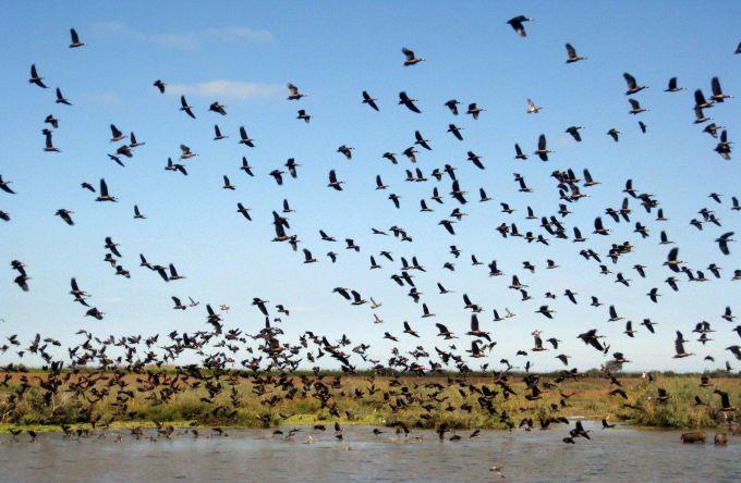 朱贾国家鸟类保护区