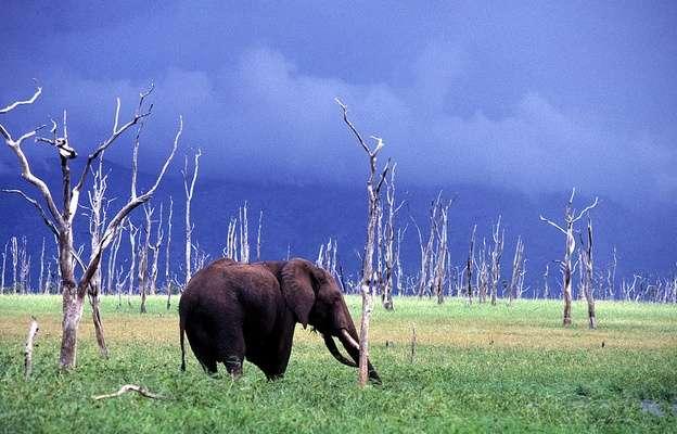 马土萨多纳国家公园