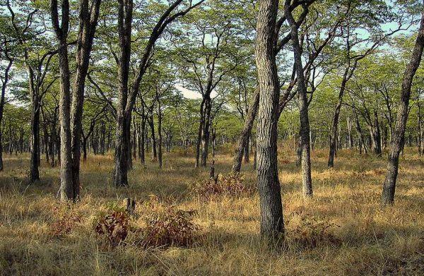 南卢安瓜国家公园