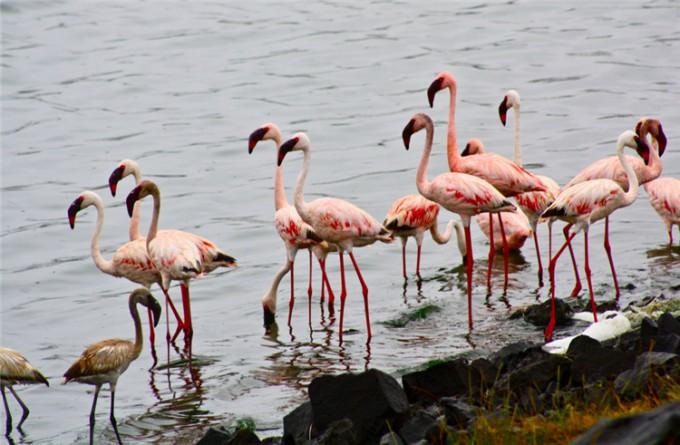 阿鲁沙国家公园 _阿鲁沙_坦桑尼亚
