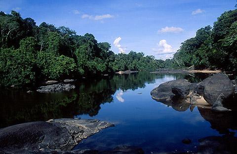 苏里南中心自然保护区