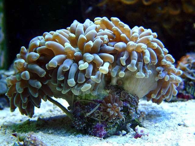 伯利兹生物礁旅游