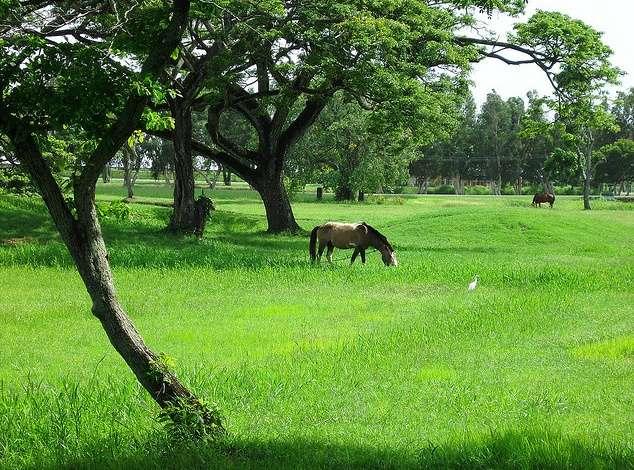 圭亚那国家公园