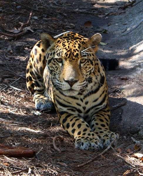 伯利兹动物园旅游