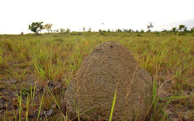 鲁普努尼热带稀疏大草原