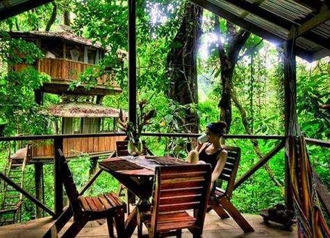哥斯达黎加树屋酒店