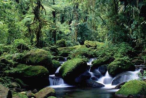 蒙特沃德云雾森林保护区