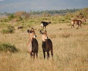 【坦桑尼亚】坦桑尼亚9天猎奇之旅
