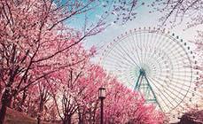 怀化到日本旅游