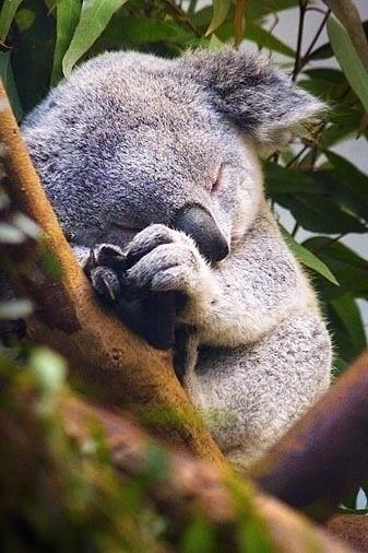 珀斯动物园_珀斯_澳大利亚