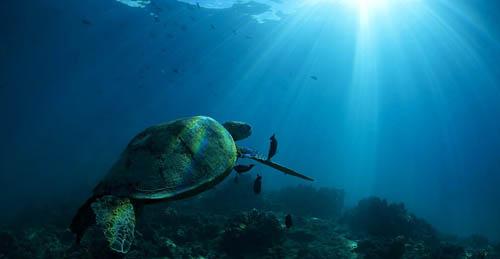 诗巴丹岛:在潜水中欣赏美丽