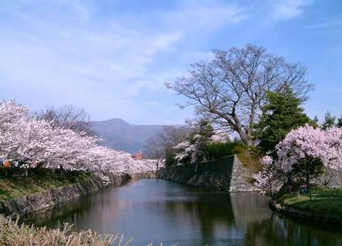 年日本樱花节旅游乐虎国际官网手册