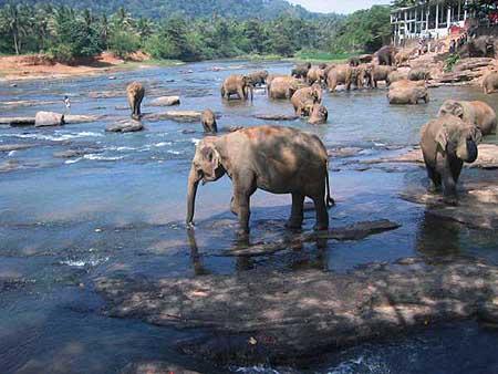 斯里兰卡旅游景点图片介绍