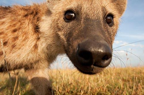 去肯尼亚看不曾见过的奇珍异兽