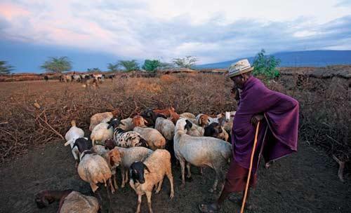 游牧肯尼亚 生生不息的非洲梦