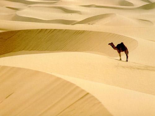 撒哈拉沙漠气候