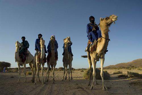 揭秘撒哈拉沙漠中的生存之道 别信你的眼睛