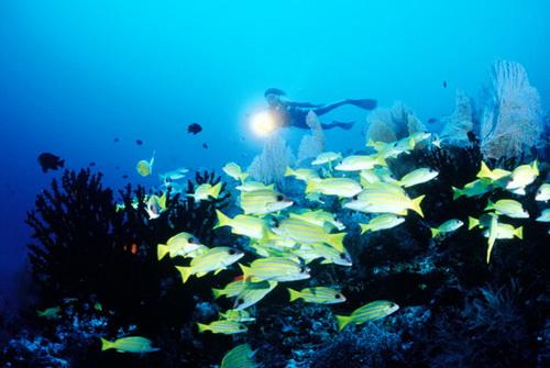 马尔代夫满月岛旅游攻略