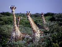 【非洲秘境】纳米比亚梦幻10天